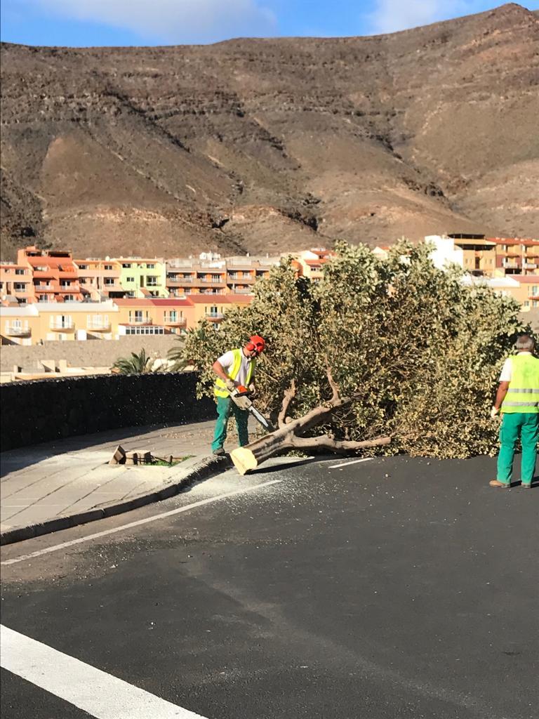 """El Ayuntamiento sustituye los ejemplares de árbol """"Pica-pica"""". (Lagunaria patersonia) atendiendo a las quejas vecinales"""
