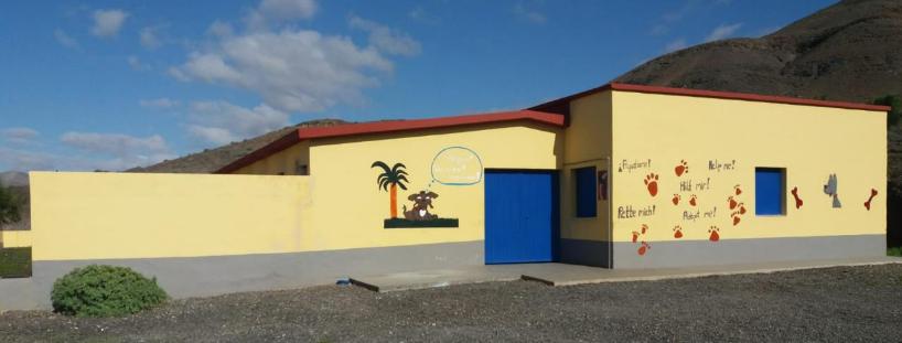 Los animales sin hogar del municipio de Pájara ya son visibles y accesibles en la web