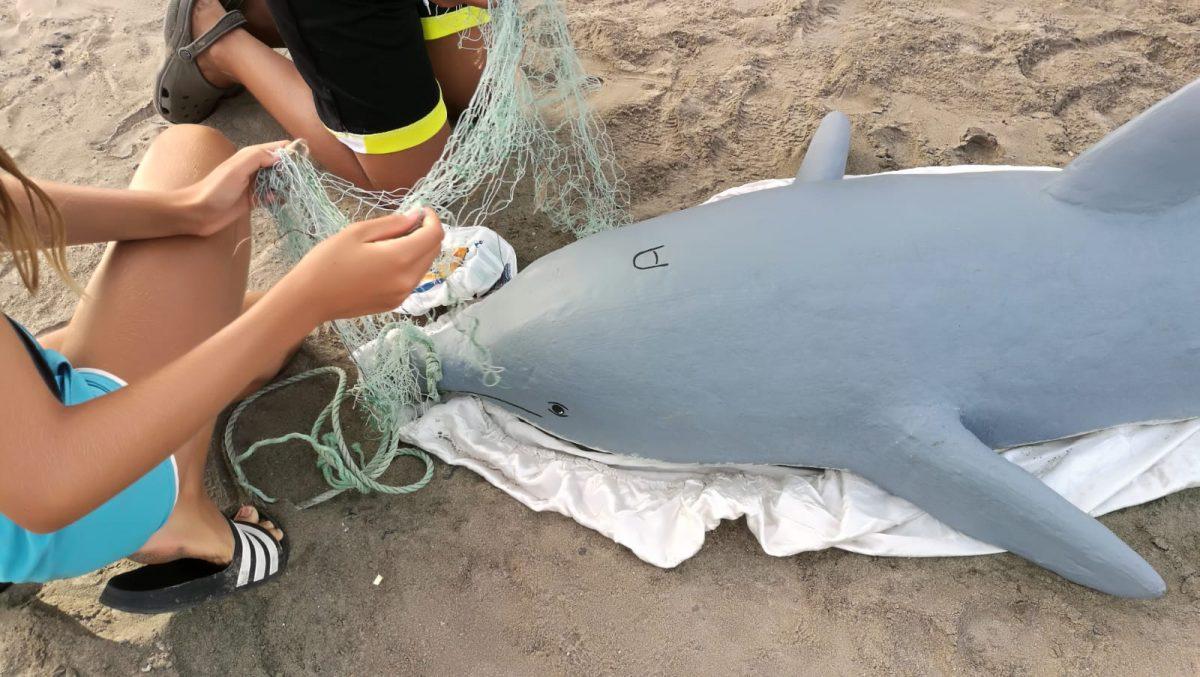 El Ayuntamiento de Pájara realiza un taller sobre rescate de cetáceos varados