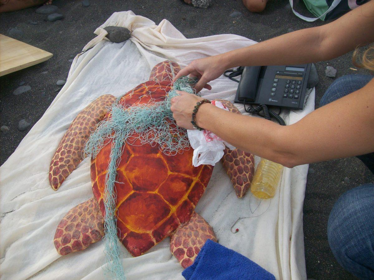 Cerca de 200 estudiantes de Pájara aprenderán a socorrer a tortugas marinas en riesgo
